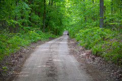 Waldweg nach Nikolaiken