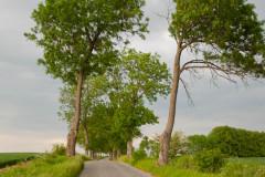 Straße nach Kamionek Wielki